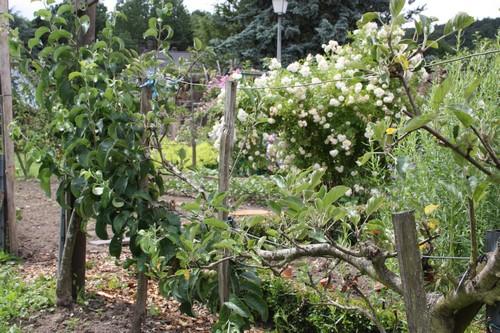 Jardin 2013 06 030